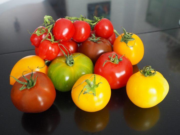 <h5>Tomaten mit frohem Farbenspiel</h5>