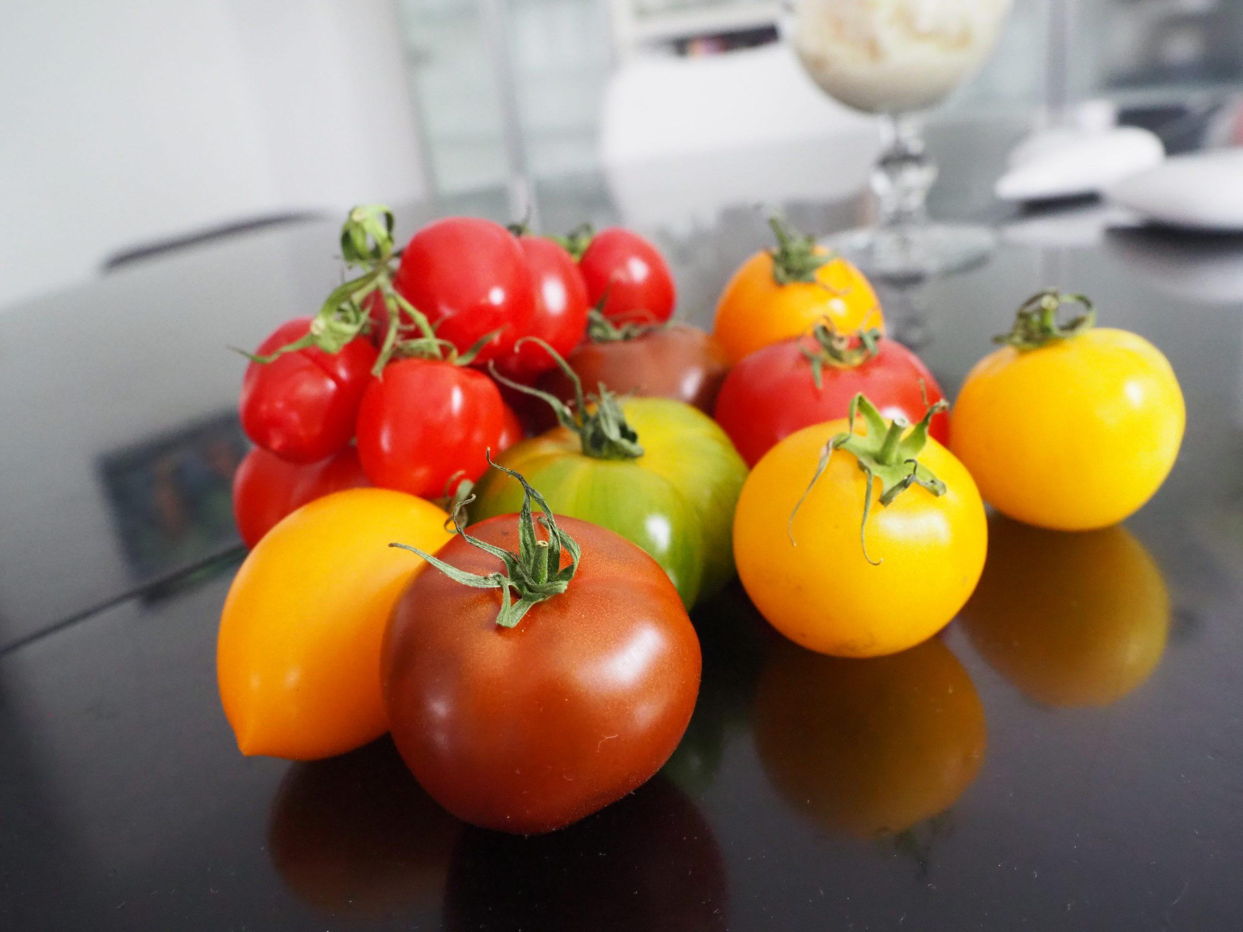 Tomaten mit frohem Farbenspiel